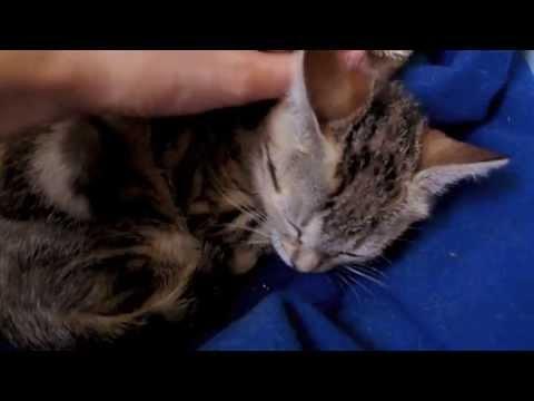 Le café des chats : crowdfunding
