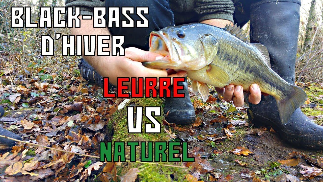 Pêcher le Black-Bass en Hiver  C est possible! - YouTube 386478ae1a82