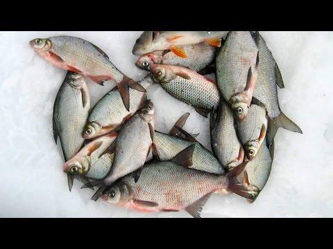 прикормка зимней рыбалки на леща