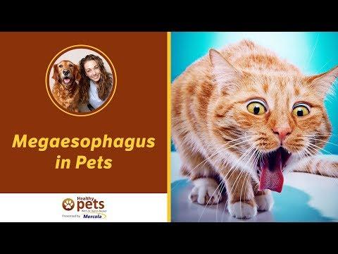Megaesophagus in Pets