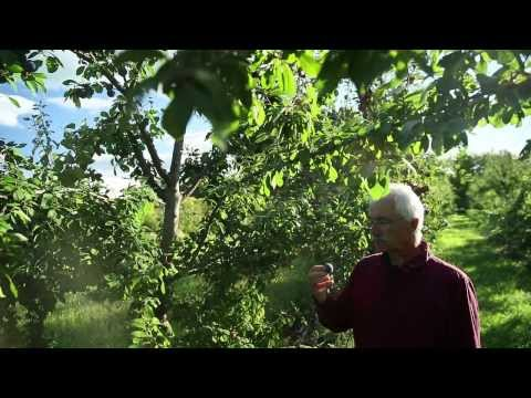 Miracle Farms, a 5-acre commercial permaculture orchard in S