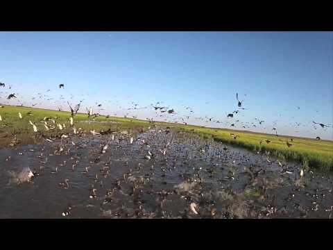 Duck Hunting Argentina River Plate Winshooting
