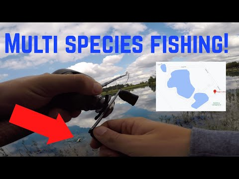 Fishing At KOPPS LAKES In CLARKSVILLE IN (Multiple Species Caught!)