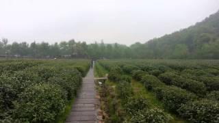 Hangzhou Tea Farm 1minutes Mediation