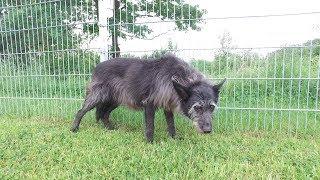 Tierheim Ostermünchen: Hündin Lassie sucht ein neues Zuhause
