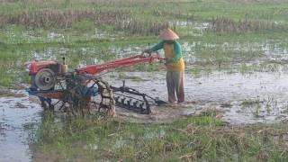 Traktor Sawah di sore hari di desa Kunir kecamatan Butuh kabupaten Purworejo