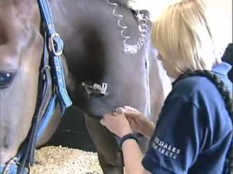 A Day in the Life of an Equine Veterinary Nurse