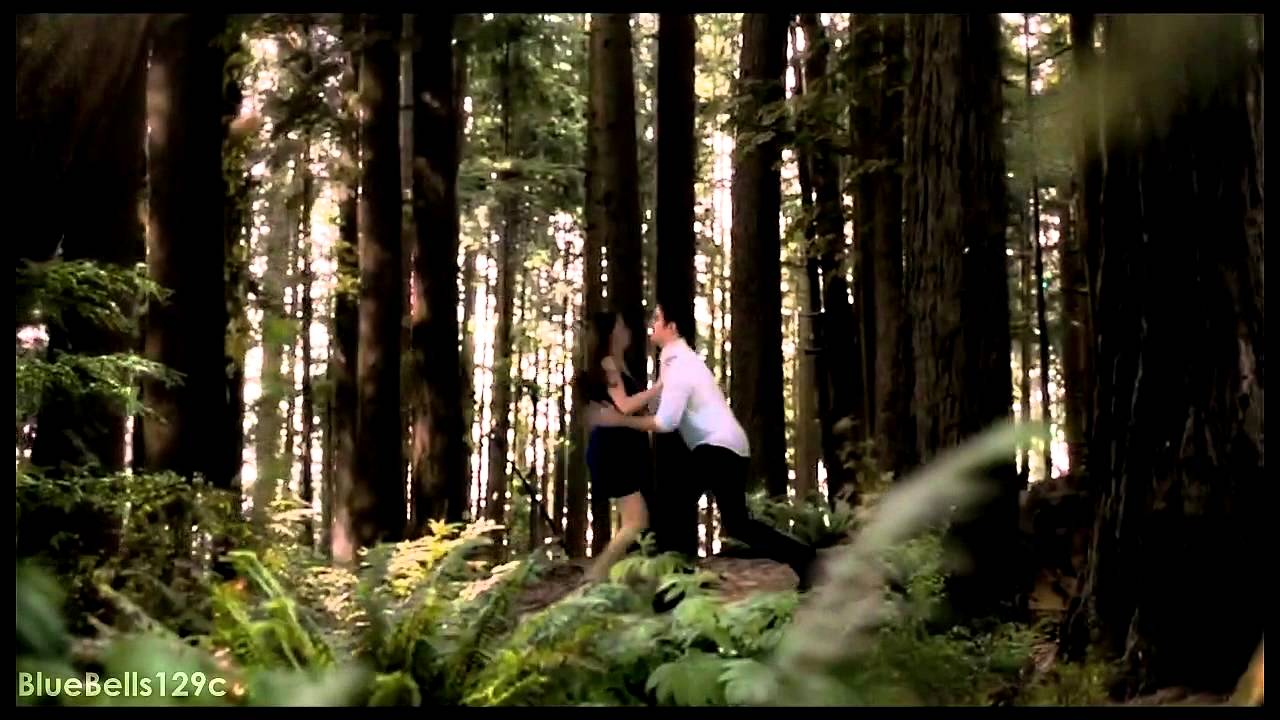 The Forest Of Forks  The Twilight Saga - Tribute - Youtube-7085