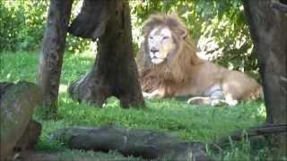Una visita al zoologico de Buenos Aires