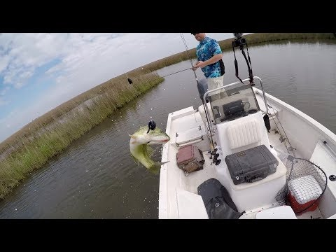 Redfish, bass round out epic fishing day