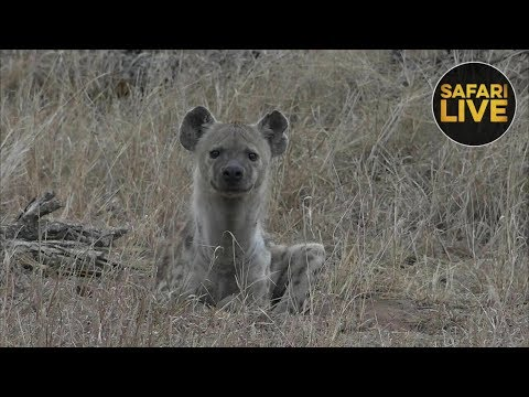 safariLIVE - Sunrise Safari - October 10, 2018