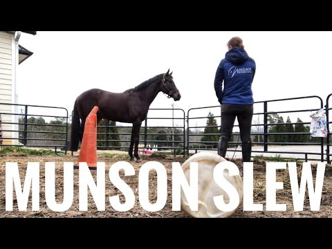 My New Horse! Introducing Munson Slew