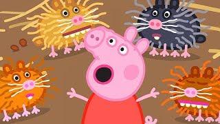 Peppa Pig en Español Episodios | Criaturas Pequeñas | Pepa la cerdita