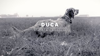 DUCA | Setter Inglese figlio di Lupin dello Zorino