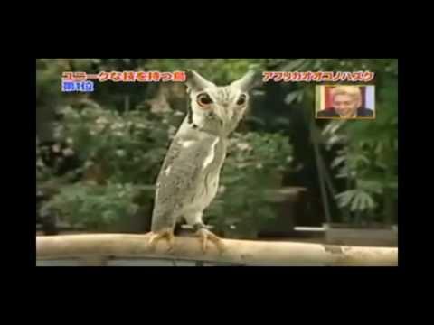 Transforming Owl!