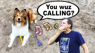 'You wuz Calling?' LOST DOG⁉   A Biscuit Talky on Cricket 'the sheltie' Chronicles Whistle Recall