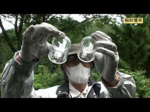 日本福島 核災幅射