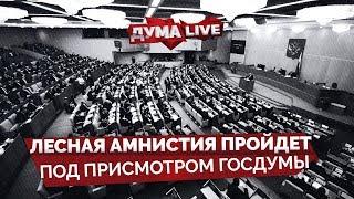 """""""Лесная амнистия"""" пройдет под присмотром Госдумы [прямая речь]"""