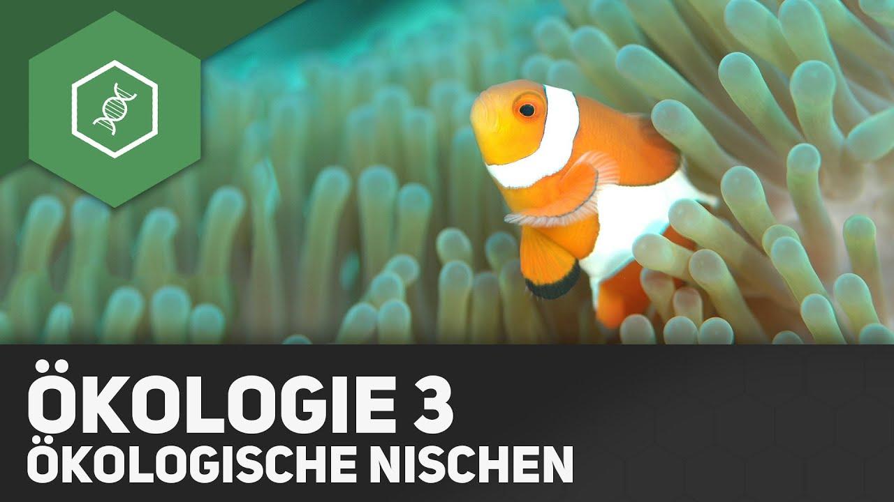 umweltfaktoren und kologische nischen kologie 3 youtube - Okologische Nische Beispiel