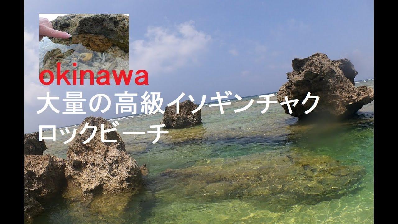 沖縄 高級イソギンチャクが大量にいる ロックビーチ行ってみる