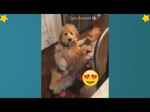 Baby And Dog - Baby And Cat - Cute Babies And Pets Videos Compilation #2