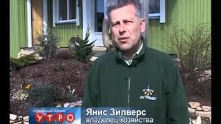 Питомник растений Pīlādži(Латвия расположена севернее стран традиционного виноградорства. Но мы можем наслаждаться пьянящим аромат..., 2012-04-23T13:12:23.000Z)