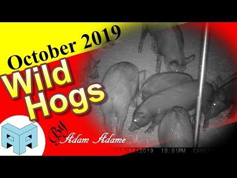 West Texas Wild Hogs