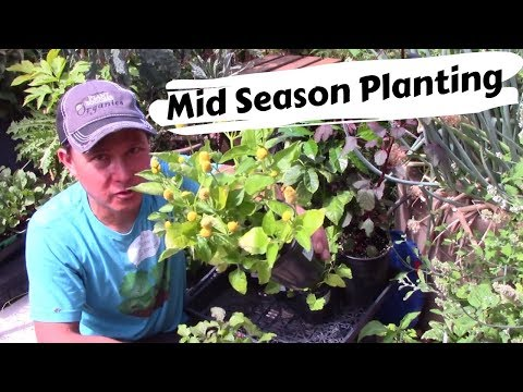 Why Plant in the Mid-Season or Shoulder Season Garden + Rare Vegetable Haul