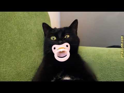 видео: Приколы с кошками и котами  Подборка смешных и интересных видео с котиками и кошечками