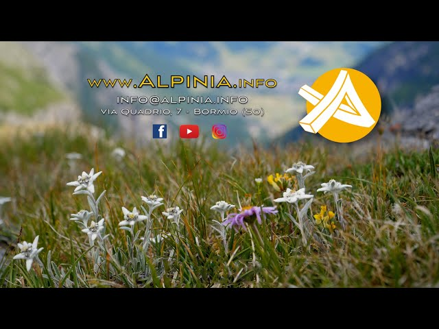 SINTESI di TUTTI i documentari di Alpinia