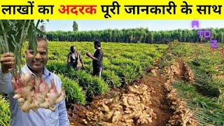 अदरक की खेती कब और कैसे की जाती है Ginger Farming in India | Ginger Cultivation