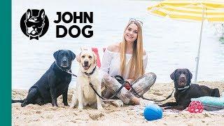 Pies na wakacjach okiem weterynarza - ZDROWIE PSA - John Dog
