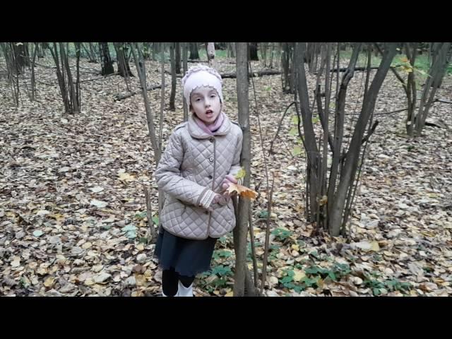 Изображение предпросмотра прочтения – ВалерияСнопкова читает произведение «Сухие листья (Сухие листья, сухие листья...)» В.Я.Брюсова