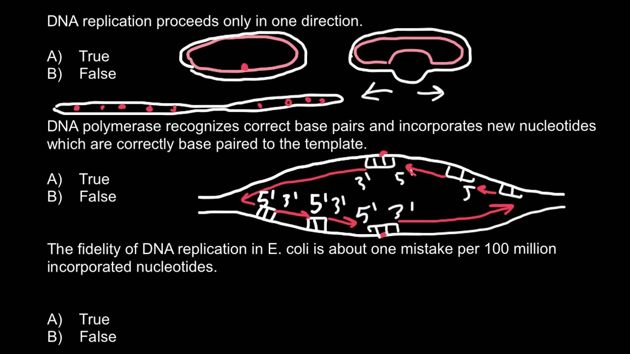 True false questions about dna replication youtube true false questions about dna replication malvernweather Image collections