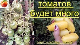 Томатов будет очень много Советы Секреты выращивания рассады tomatoes Вопросы Сделай так Урожай-2 ч.