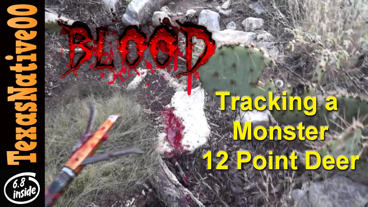 Blood Trail - Tracking Down a 12 Point Buck Shot with a Compound Bow & Blood Trail - Tracking Down a 12 Point Buck Shot with a Compound ... azcodes.com