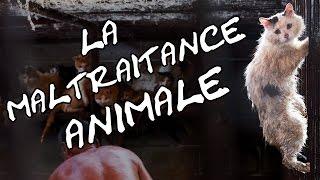 La maltraitance animale