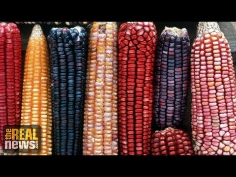 New GMO Crops Temporarily Blocked in Mexico