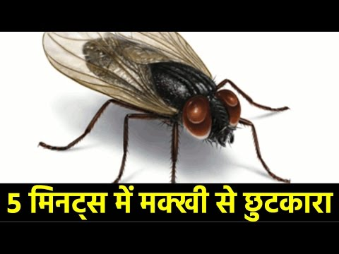 Home remedies to kill flies in your house