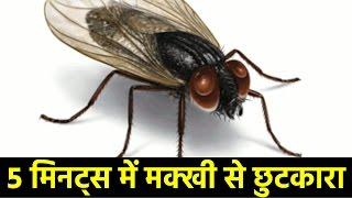 15 टिप्स मक्खियों से छुटकारा पाने के लिए | How To Get Rid Of House Flies