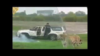Animalattack #animal #fight #animal, #wild.