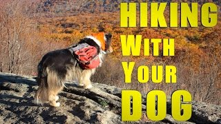 Hiking the Appalachian Trail With Your Dog