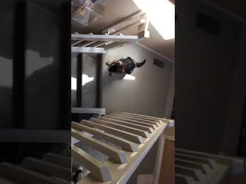 Ragdoll Cats Won't Let German Shepherd Puppy Come Upstairs - Floppycats