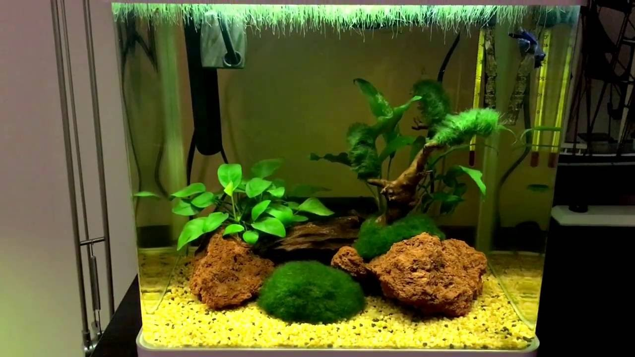 Plafoniere Blu Bios : Presentazione acquario tropicale dolce blu bios billy led
