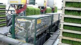 12 row fully automatic transplanter from Transplant Systems in Holland
