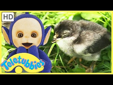 Teletubbies English Episodes - Chicks ★ Full Episode 228 | US