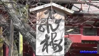2018年1月20日福岡県大宰府天満宮にて撮影しました。 BGMはもちろん ま...