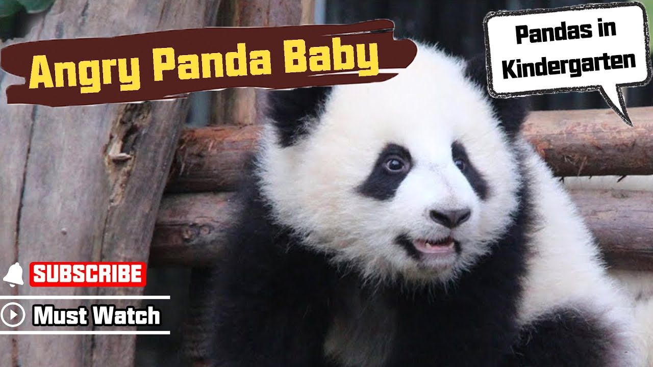 Giant panda | Smithsonian's National Zoo