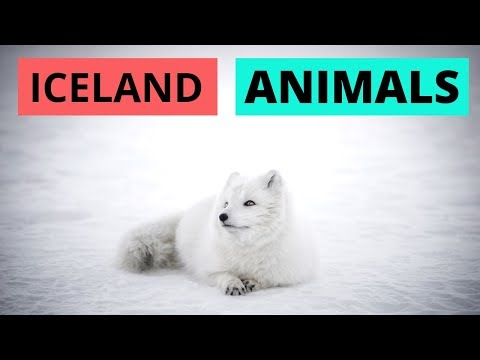 Animals + wildlife in Iceland | Where and When to find them