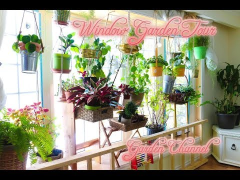 Episode 1 :Window Garden Tour   Houseplant Tour